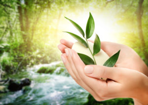Human hands holding organic soap