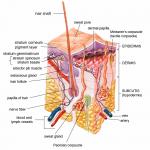 Exfoliation (Cosmetology)